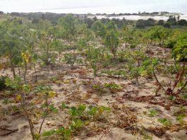 As mulheres nao tem acesso a terra em Moçambique, especialmente em Nampula